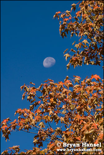 Fall Color and Moon