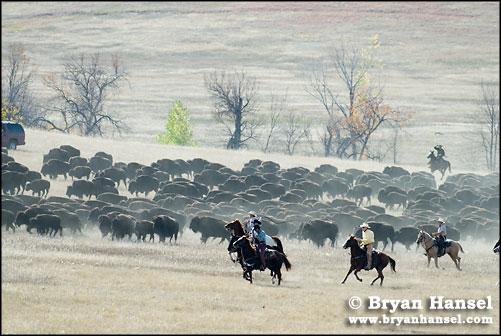 buffalo round up 2006