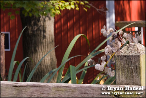 Barn and Plants