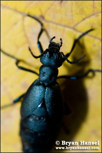 Crazy Bug