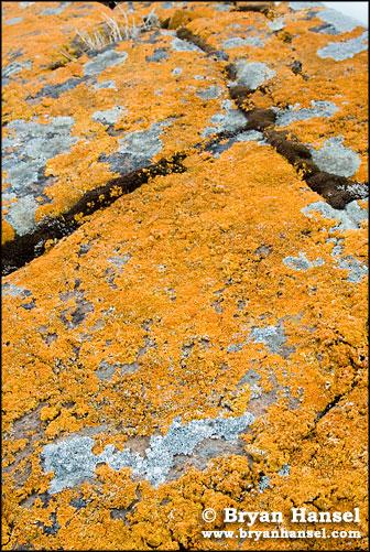 Northland Lichen