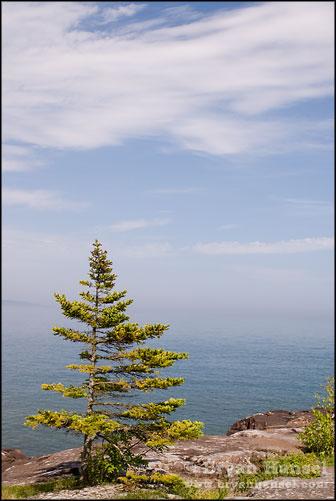 Lake Superior Tree