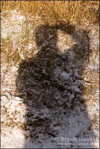 Self Portrait Northland Snow