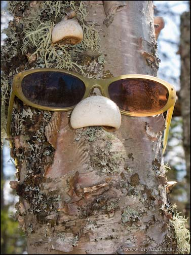 Tree with Glasses