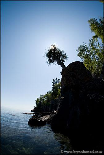 The Witch Tree - Manido Giizhigance - Little Cedar Spirit Tree