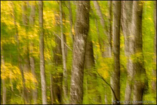 Blur Fall Colors