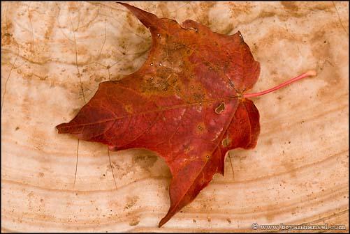 Maple Leaf on Mushroom
