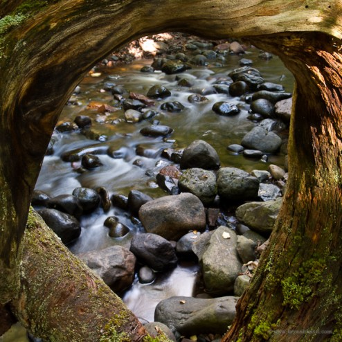 The Keyhole: A round, twisted root of a cedar tree.