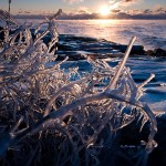 Ice coated branches on Lake Superior.
