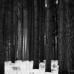 The Dark Woods IV