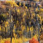 Fall in the Ham Lake Fire