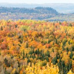 Fall Colors from Rengo Road