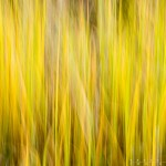 Abstract of fall color grass.