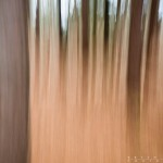 A abstract of a pine forest in late fall.