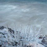 ice coated bush on lake superior