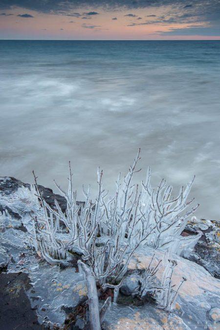 ice coated bush on lake superior
