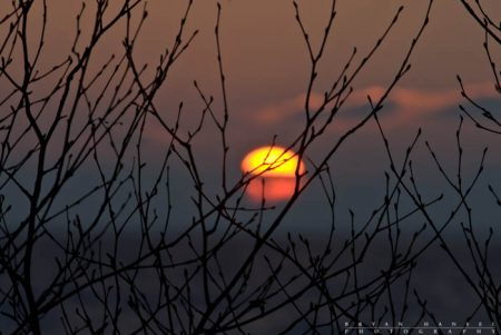 Buds and the Rising Sun