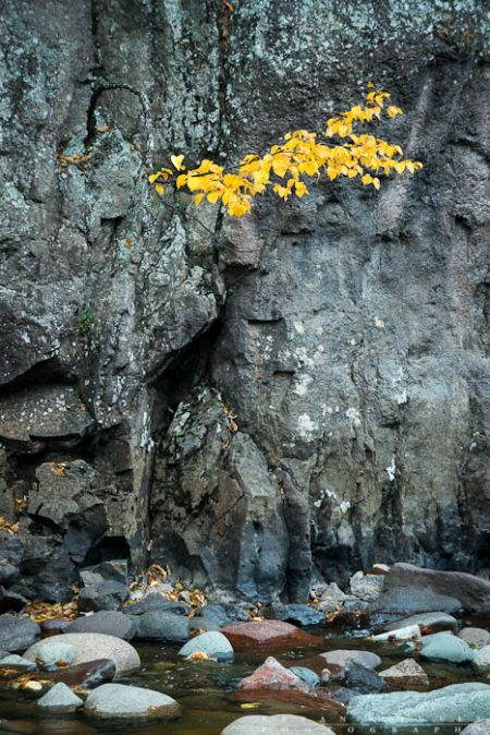 a small birch tree hangs onto a cliff