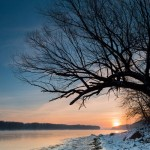 winter and tree on the mississippi river