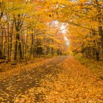 fall color on the honeymoon trail
