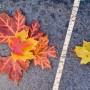 fall color leaf arrangement