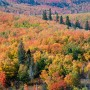 Oberg Mountain fall color
