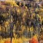 Fall color in the Ham Lake fire area. Minnesota.