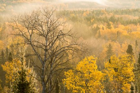 A valley of yellow on the Gunflint Trail in the morning.