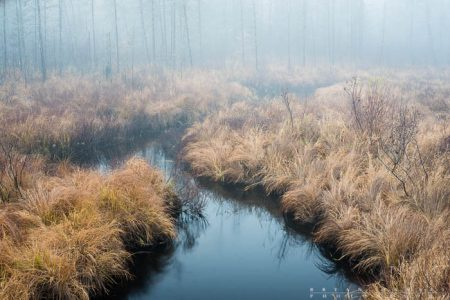 Stream to the Fog