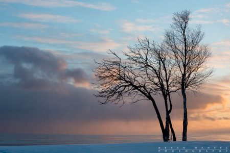 A birch and mountain ash trees stand watch over Lake Superior. Grand Marais, Cook County, Minnesota.
