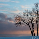tree and lake superior