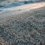 shell pile on Sanibel Island