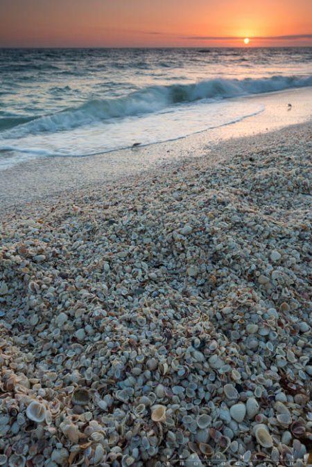 shell pile on Sanibel Island