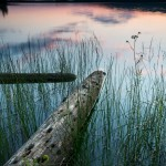 An old log on Two Island Lake in northern Minnesota sticks out from shore at sunset. The lake is mirror calm. Cook County, Minnesota.