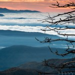 a tree over the clouds in the Smoky Moutains