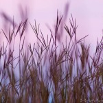 prairie grasses at the Des Moines photography workshop