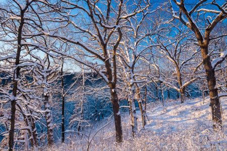 snow coated trees at Mines Of Spain