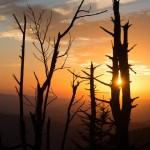 sunset through dead fir in the smokies