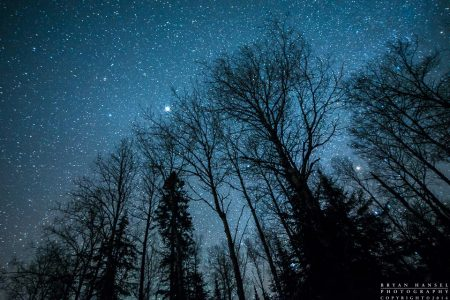 winter trees under stars