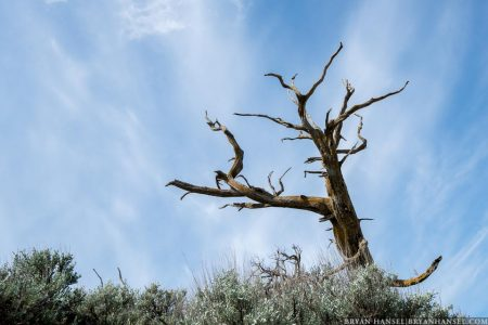 tree in the North Dakota Badlands