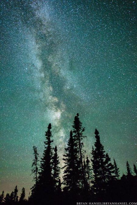 Milky Way above a group of trees