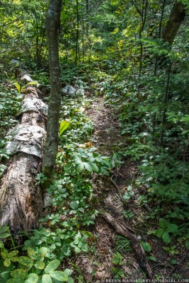 illegal trail in the woods