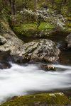 waterfall and dogwood