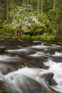 rapids and dogwood