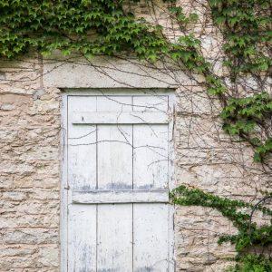 door and vines