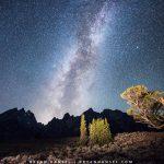 Grand Teton The Old Patriarch Tree under Milky Way