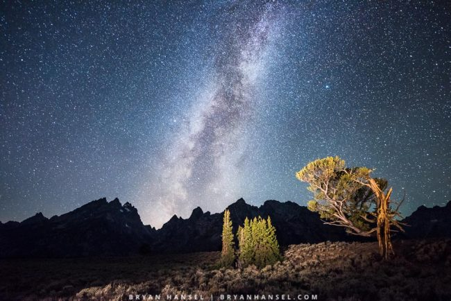 Milky Way over old sentinel tree in Tetons