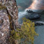 cedar tree over Black Beach and Lake Superior